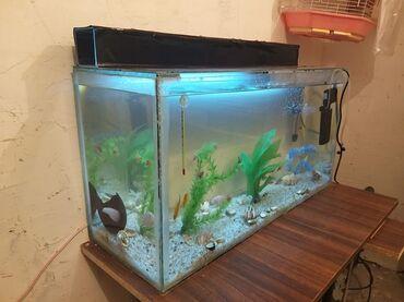 deri aksesuarlar - Azərbaycan: Akvarium aksesuarlari ile birlikde satilir