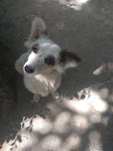 хундай портер цена бишкек в Кыргызстан: Добрейшая ласковая собачка .Девочка 4. 5месяцев. ищет любящий