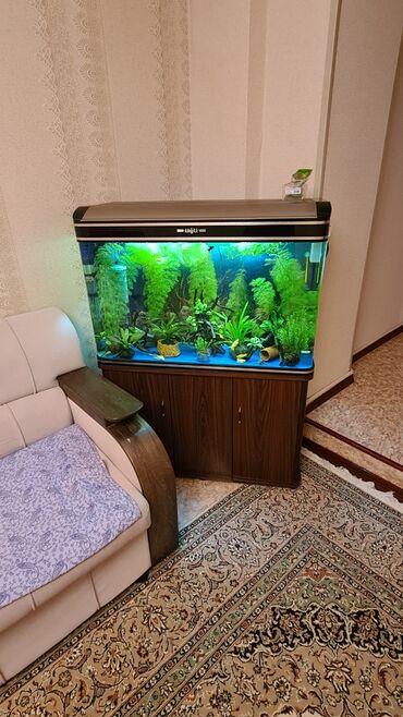 Продаю аквариум полностью оборудованый со всем содержимым