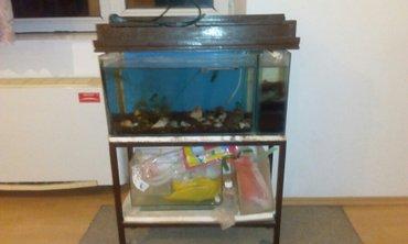 Prodajem akvarijum sa postoljem.Cena 3000 dinara.Prednost Nis í - Nis