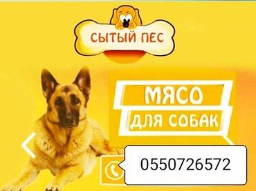 Продаются мясо для собак в Бишкек