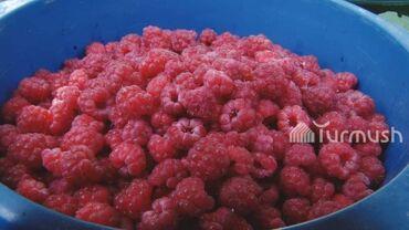 protertaja malina в Кыргызстан: Malina 250 som kgAdres: Almatinka MagistralOt 10 kg dostavka besplatno