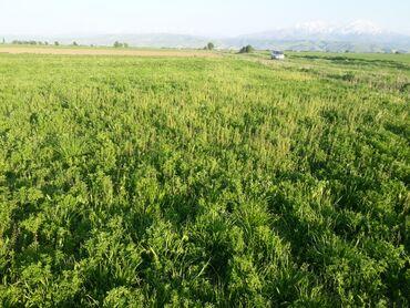 жер в Кыргызстан: Продажа участков 5 соток Собственник