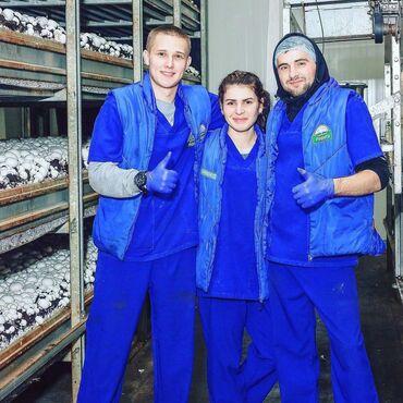 Работа - Бишкек: Запуск производства грибов создал новые рабочие места в Курской област