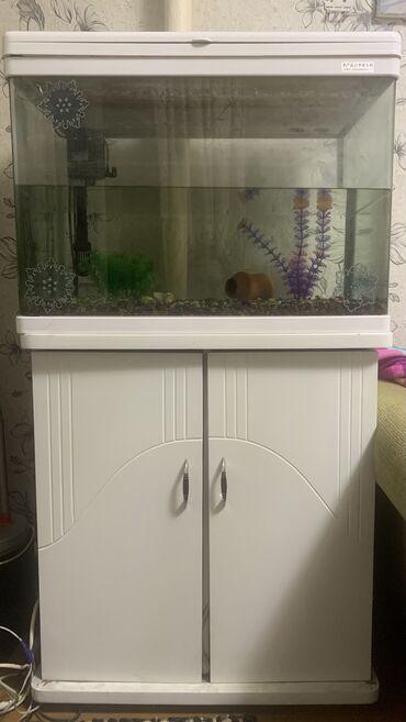 760 объявлений: Продаю аккуратный аквариум,делали на заказ,примерно 100 литров со