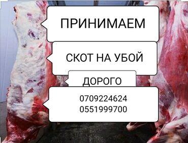 купить айфон х бу in Кыргызстан   APPLE IPHONE: Куплю   Коровы, быки, Лошади, кони, Другие с/х животные   Круглосуточно, Любое состояние, Забитый