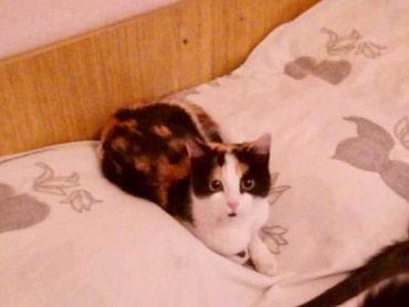 Котята-кошечки в добрые руки! в Бишкек
