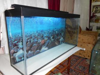 Bakı şəhərində Akvarium 1 metrelik   qapaqi var qapaqinda iwiq yerleri var  arxa fon