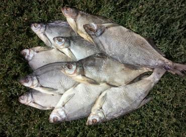 Продаю оптом вяленую рыбу  Лещ по 130 сом за кг. Рыба очень вкусная!  в Лебединовка