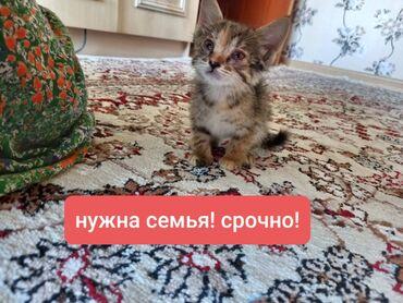 Животные - Таджикистан: Коты