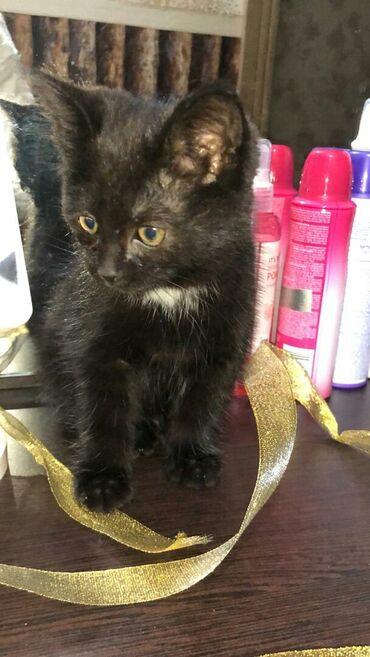 Коты - Кыргызстан: Отдам котёнка в хорошие рукиПол: девочкаОкрас: черно-белаяХарактер