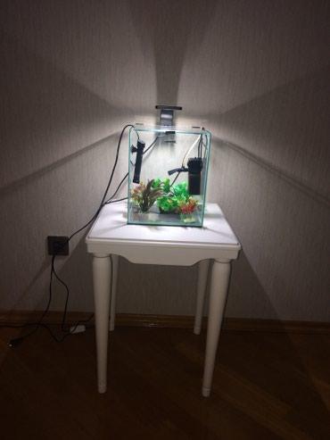 Bakı şəhərində Akvarium AQUAEL butun avadanliqlari ve dekor ile 100azn , stol 200azn