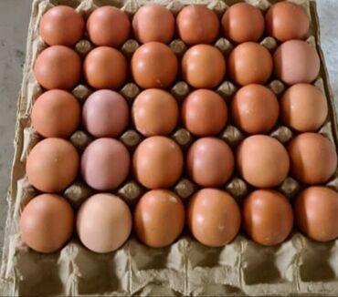 электроды арсенал оптом в Кыргызстан: Продаю яйцо куриное оптом и розницу.Категория с1 цена договорная