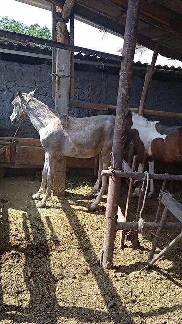 Животные - Студенческое: Лошади, кони