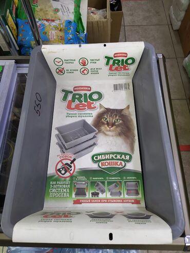 лоток для кошек бишкек in Кыргызстан | ЗООТОВАРЫ: В связи с закрытием зоомагазина продаётся туалет для кошек без бортика