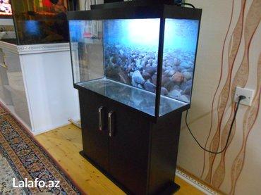 Bakı şəhərində teze akvarium mebeli ile birlikde tezediler akvariumun olcusu