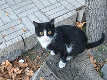стерилизовать кошку в Кыргызстан: Кошечка в поисках семьи! Возраст около 8-9месяцев, стерилизована (котя