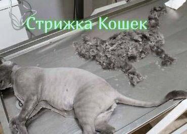 Стрижка кошек под наркозом. Возможен выезд на дом. Стоимость стрижки