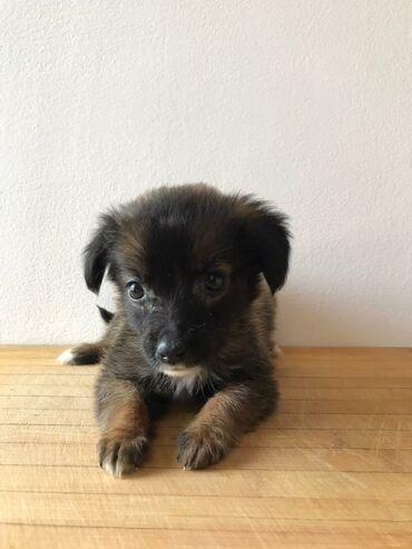 Животные - Орто-Сай: Срочно! Отдам в добрые руки чудесного щенка! Возраст около месяца. От