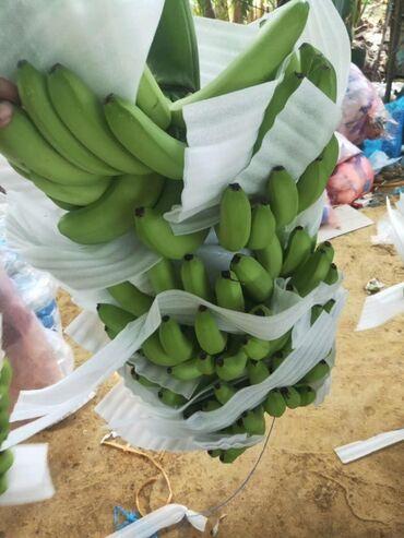 Грузоперевозки из китая в алматы - Кыргызстан: Бананы оптом из КитаяПринимаем заказы на бананы#банан #бананзор