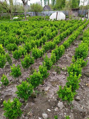 Дом и сад в Балакен: Другие товары для сада