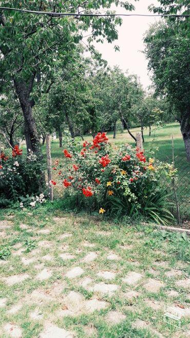 Daşınmaz əmlak - Azərbaycan: 20 sot, Kənd təsərrüfatı, Barter mümkündür, Kupça (Çıxarış), Bələdiyyə, Müqavilə