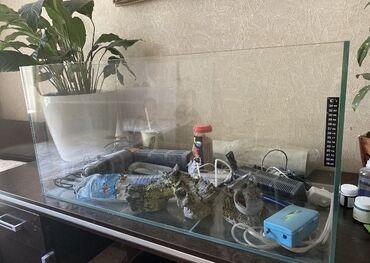 платья из штапеля бишкек в Кыргызстан: Аквариум для рыб в полном комплекте Нагреватель, фильтр,трубки декор