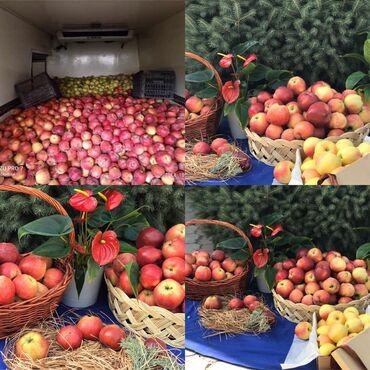 Овощи, фрукты - Кыргызстан: Яблоки Оптом превосход