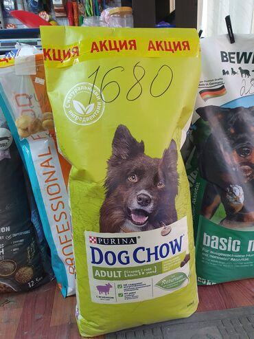 Животные - Кок-Джар: Успей купить корм для собак Dog Chow по оптовым ценам!