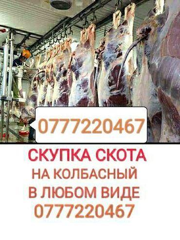 Скупаю скот в колбасный цехскупаю коров бычков тёлок лошадей в