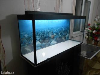 Bakı şəhərində Teze akvarium 1 metrelik  topdan qiymete  bawqalarida var