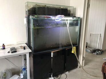 Аквариумы - Кыргызстан: Аквариум 420л с тумбой(армированна)верхний фильтр САМП.В комплекте