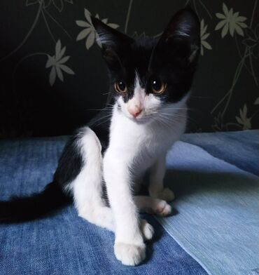 Котенок с непростой судьбой. Феликс (пока назвали его так) попал к нам