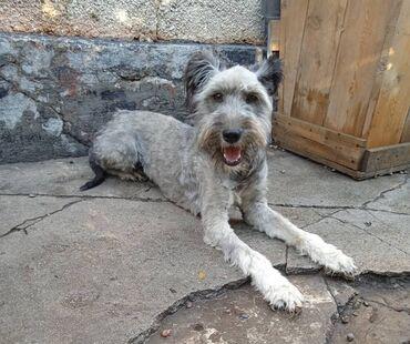 Фонд помощи Животным «Добрые руки», ищет добрые руки для собаки, Линда