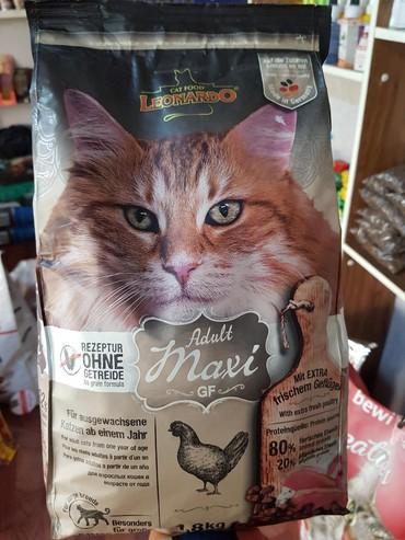 японская порода кошек в Кыргызстан: Корм для взрослых кошек крупных пород - Мейн кун, Норвежская лесная