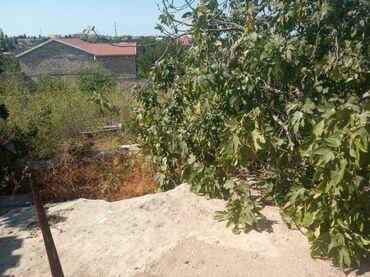 Продам - Азербайджан: Продам 21 соток Строительство риелтор