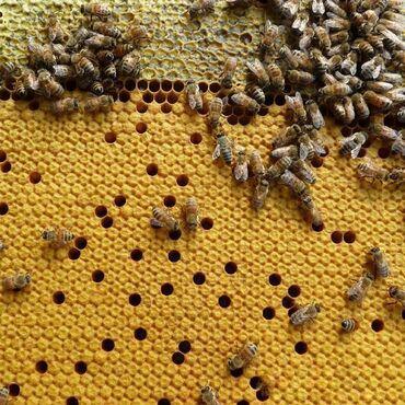 Продаю пчёл на высадку, 6-16 рамок расплода.Система РУТВсе матки 2019