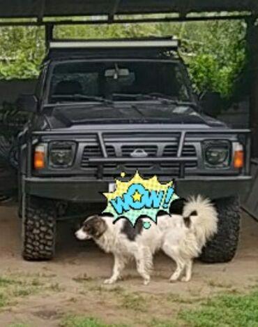 Автомобили - Шопоков: Nissan Patrol 2.8 л. 1992