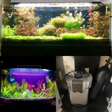 bitkilər - Azərbaycan: Akvarium əla vəziyyətdədir.icinin filteride var(akvariumdan əlavə