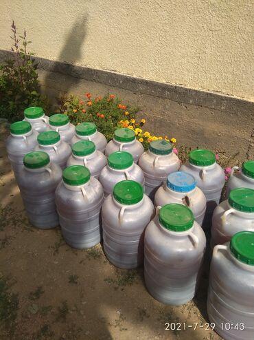 16 объявлений: Бал сатылат литири 400 сом Токтогулдун балы