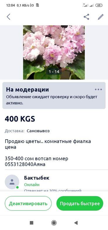 эпоксидная смола цена в баку в Азербайджан: Продаю цветы. комнатные фиалка цена 350-400 сом