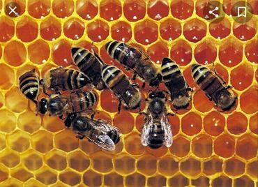 Животные - Чолпон-Ата: Продаю пчел, 6 семей, вместе с оборудованием. Хутор, Чолпон -Ата