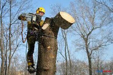 Спил деревьев!! Любой сложности!!