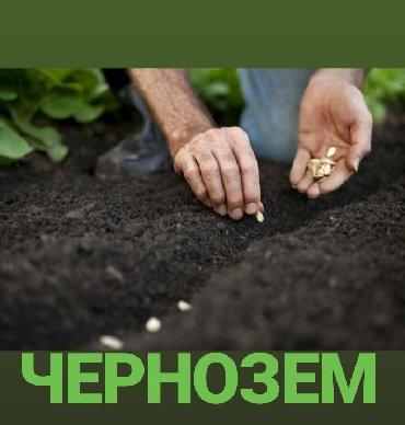 чернозем в Кыргызстан: Чернозем Чернозем Чернозём!Высокоплодородная земля!Для газона