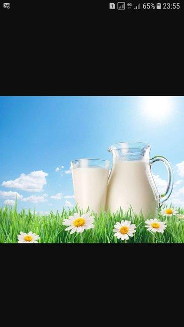 Домашние молочные продукты оптом и в в Бишкек