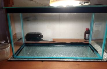 Животные - Дюбенди: Akvarium 4 mm şüşədən Uzunluğu 55 sm Hündürlüyü 30 sm Eni 30 sm