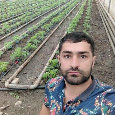 Другие специальности в Азербайджан: Аграном