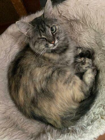 Фонд помощи животным Добрые руки ищет хозяина для кошечки. Она очень л