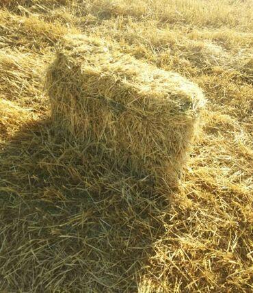 Животные - Арашан: Продам солому пшеницы в тюках. Саман тук, буудай саман, тюк, түк сатам