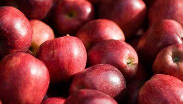 Продам яблоки сорта Клипсон, тают во рту, 50сом за кг, есть 2тонны
